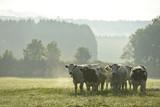 vache agriculture agriculteur ferme terre planete bio lait crise environnement ecologie campagne - 180087119