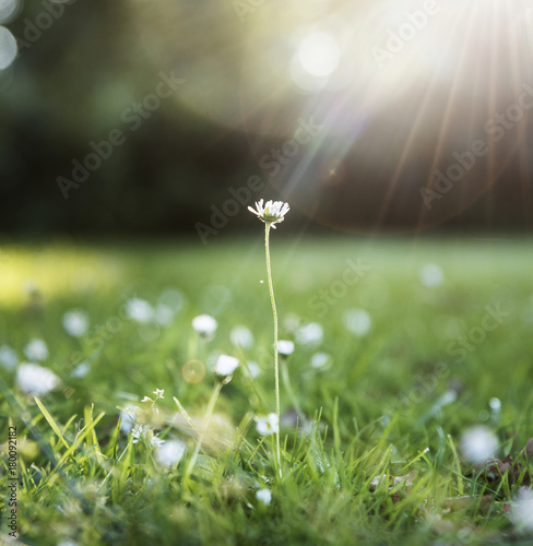 Closeup of grass flower with sun light