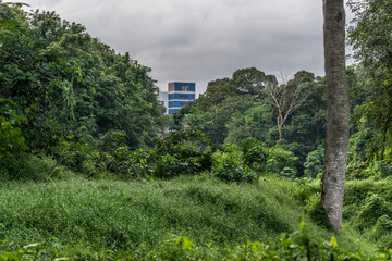 View of a dense tropical forest.