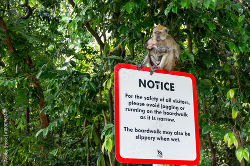 Aluminium Aap A monkey sits on a sign in the McRitchie among the green forest