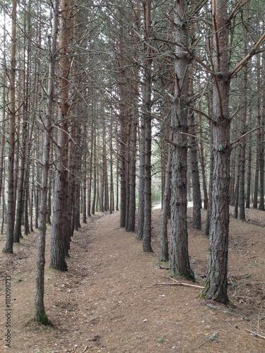 Aluminium Weg in bos Arboles en la montaña