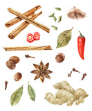Watercolor spices isolated on wite background - 180101748