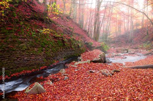 Fotobehang Bleke violet Waterfall in the autumn beech forest