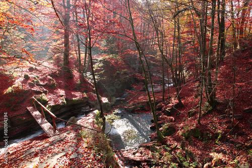 Aluminium Zalm Waterfall in the autumn beech forest