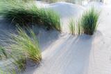 Nordsee, Strand auf Langenoog: Dünen, Meer, Entspannung, Ruhe, Erholung, Ferien, Urlaub, Meditation :) - 180105731
