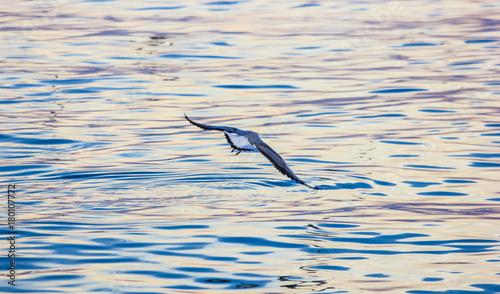 Plakat Evening Bird over wild sea