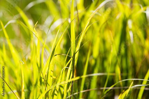 Tuinposter Geel green grass in a park in the nature
