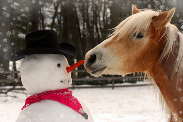 Horse Stealing Carrot From A Snowman