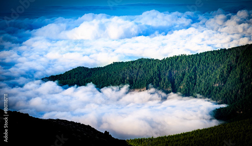 Foto op Canvas Canarische Eilanden Trees in the Clouds