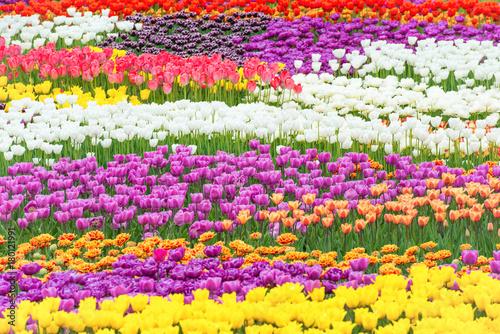 Fotobehang Tulpen Tulip flowers in the green beautiful park