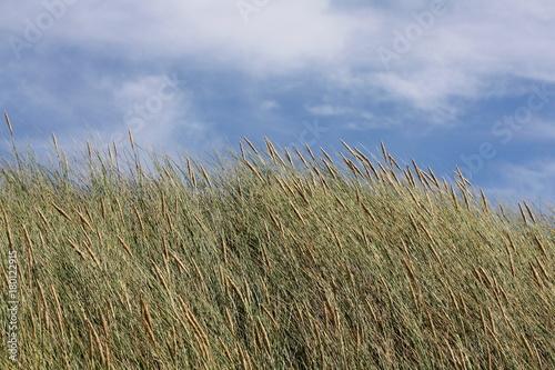 Fotobehang Noordzee Dünenlandschaft