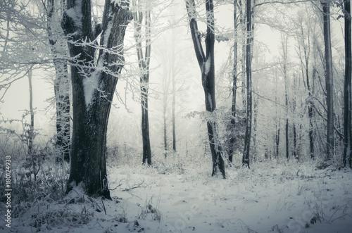 Fotobehang Betoverde Bos snowy forest winter landscape