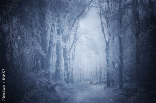 fantasy forest with snow falling in winter