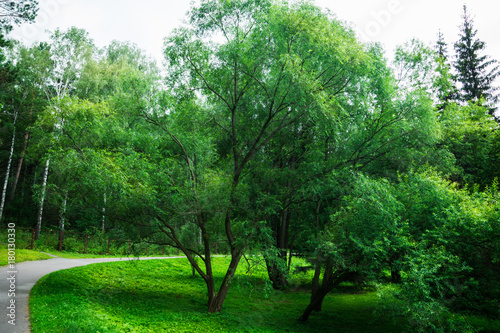 Fotobehang Groene Park with different beautiful trees