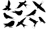 Swallow Silhouette Vector Graphics - 180131336