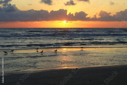 Fotobehang Zee zonsondergang Seagulls on the Gulf of Mexico at sunrise