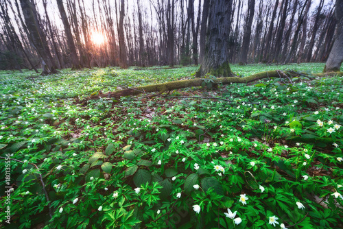 Fotobehang Lente Spring forest