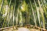 Bamboo forest Arashiyama near Kyoto, Japan