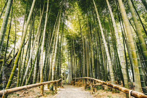 Bamboo forest Arashiyama near Kyoto, Japan