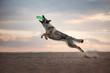 Dog Eastern European jump