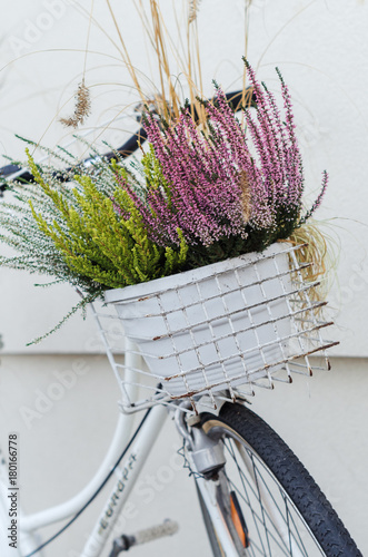 Fotobehang Fiets Basket of autumn heather flowers on white bike