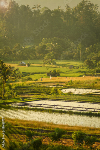 Aluminium Rijstvelden Ricefields of the Sidemen Valley, Bali, Indonesia. One of the most beautiful areas of Bali is the rice terraces of the Sidemen Valley in east Bali, Indonesia.
