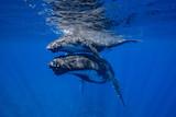 baleine à bosse et son baleineau