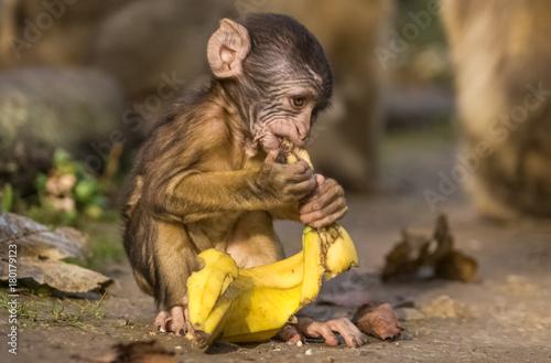 Aluminium Aap Babyaffe mit Banane
