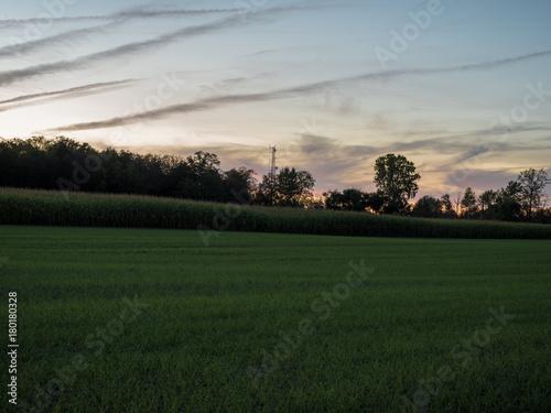 Fotobehang Donkergrijs field