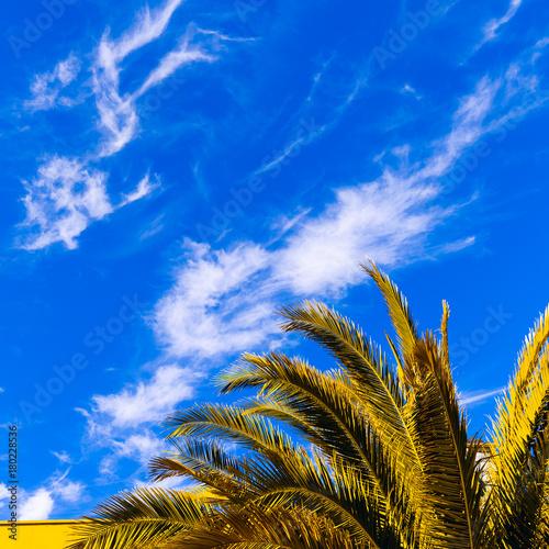 Foto op Canvas Canarische Eilanden Palm tree and blue sky. Tropical style minimal