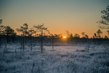 A beautiful morning landscape in a frozen swamp. Bright, colorful sunrise in frozen wetlands. Beautiful autumn scenery in Latvia. - 180233790