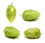 Hop cone collection isolated on white background - 180234547