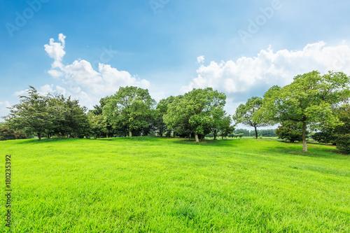 Fotobehang Lime groen Green grass and forest landscape under blue sky