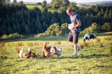 Man feeds free range chickens and a horse on a farm in Wales