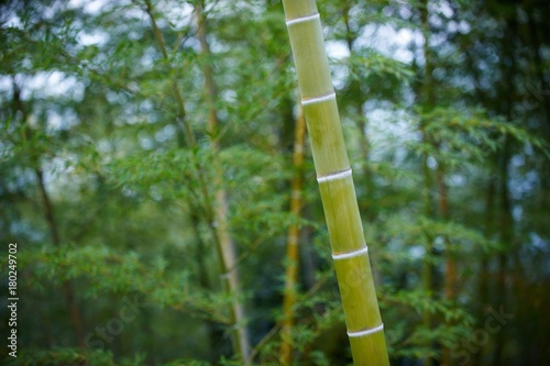 Fotobehang Bamboe Green Bamboo Forest In China