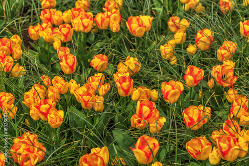 Papiers peints Amsterdam Beautiful flowers background.