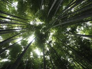 Bambus Himmel Wald Hintergrund