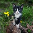 gatti felini animali domestici - 180262905