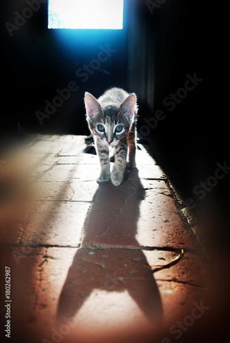 gatti felini animali domestici Poster