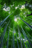 Beautiful view of the bamboo forest