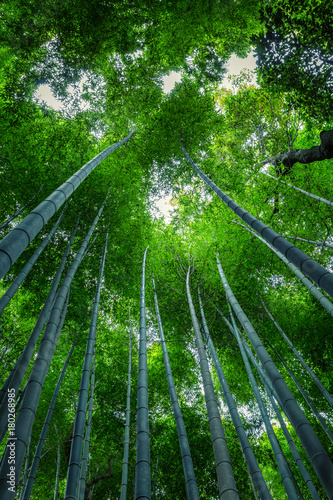 Fotobehang Bamboe Beautiful view of the bamboo forest