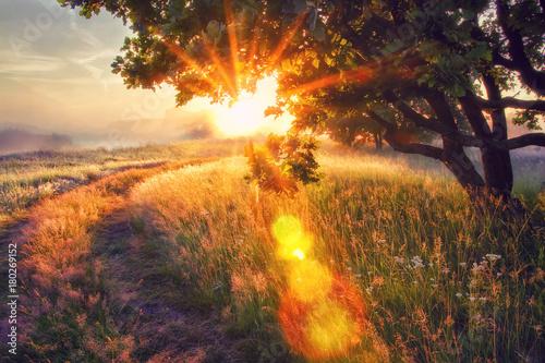 Foto op Plexiglas Ochtendgloren Vivid sun rays through branches of tree on morning meadow at sunrise. Bright dawn with shining sunbeams.