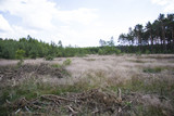 polana w lesie