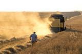 Harvest time - 180273932