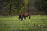 Fototapeta Horses - Konie © Jozef