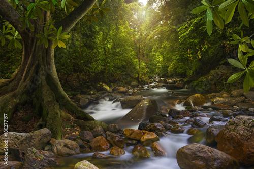Fotobehang Thailand Asian rainforest