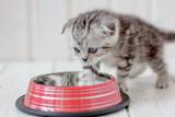 Beautiful grey kitten near the empty cat bowl.