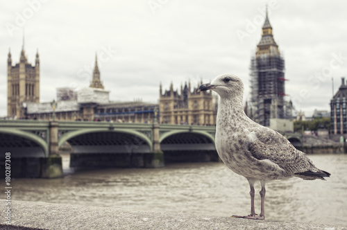 Foto op Plexiglas London Seagull. Westminster bridge, parliament and Big Ben on the background.