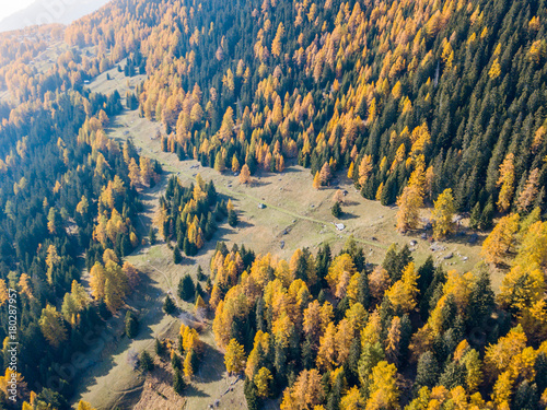 Fotobehang Nachtblauw Aerial view of hiking trail in Swiss mountains. Fall colors with yellow conifer trees.