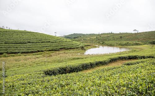 Foto op Canvas Pistache India Tea Plantation